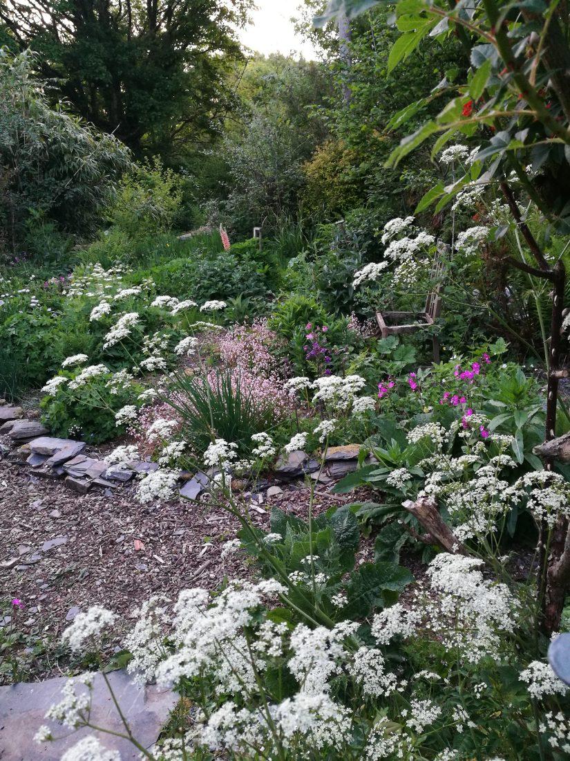 the garden in springtime